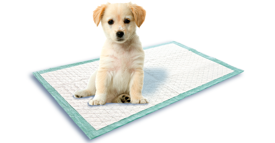 Puppy training mat from Swirl®