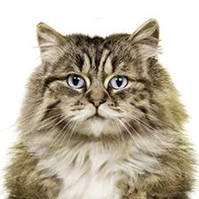 Hou de kattenbak schoon