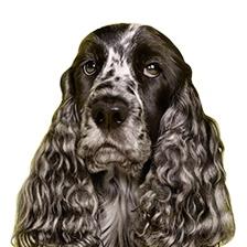Een schone oplossing voor mensen met honden